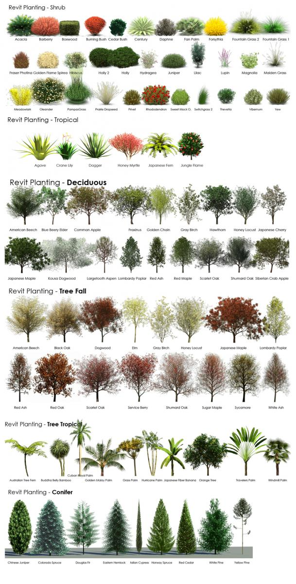 Revit rpc tree guide from a revit user archvision blog for Garden trees types